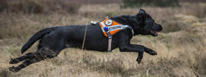 Rettungshunde Kaiserslautern